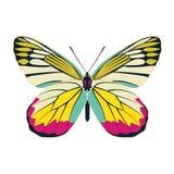 Estratto giallo dell'ala della farfalla su fondo bianco Fotografia Stock