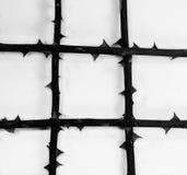 Estratto - il gambo rosa con la spina gradisce la prigione Fotografia Stock Libera da Diritti