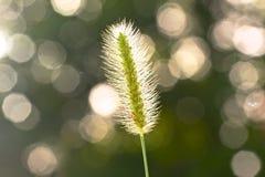 Estratto, impreesions dell'erba di Gramma Immagini Stock Libere da Diritti