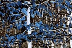 Estratto in natura Fotografia Stock