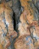 Estratto petrificato di legno fotografie stock libere da diritti