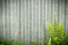 Estratto, pianta strisciante su acciaio o fondo della parete dello zinco Immagini Stock