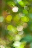 Estratto verde del bokeh Fotografia Stock Libera da Diritti
