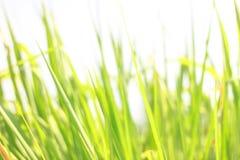 Estratto verde della priorità bassa del foglio Fotografia Stock Libera da Diritti