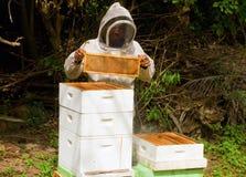 Estrazione del miele ad un'arnia su Bequia Fotografia Stock