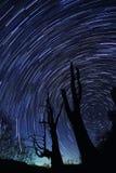 A estrela arrasta (a árvore do marido e da esposa) Fotografia de Stock Royalty Free