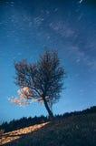 A estrela arrasta sobre uma árvore de floresta iluminada com luz da janela Fotografia de Stock