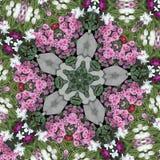 Estrela da flor ilustração stock