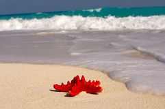 estrela de mar Foto de Stock
