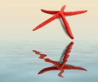 Estrela de mar Fotografia de Stock