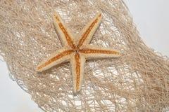 Estrela de mar em um fundo da rede Fotos de Stock
