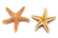 Estrela de mar isolada Imagem de Stock Royalty Free