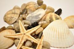 Estrela de mar, pedras e escudos do mar Fotografia de Stock