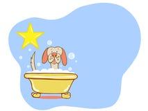 Estrela do banho do cão - Labrador Foto de Stock