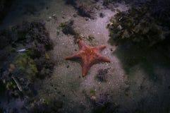 Estrela do bastão Fotografia de Stock
