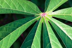 Estrela do coração verde do rosa da folha no meio Fotografia de Stock Royalty Free