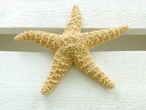 Estrela do mar fotos de stock