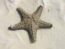 Estrela do mar Imagem de Stock