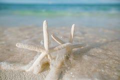 Estrela do mar branca na ação ao vivo da onda do mar, no mar azul e na água clara Fotos de Stock Royalty Free
