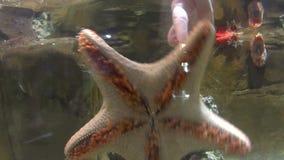 Estrela do mar com mão video estoque