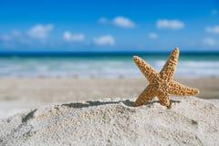 Estrela do mar com oceano, praia e seascape Imagem de Stock
