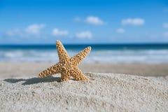 Estrela do mar com oceano, praia e seascape Foto de Stock