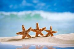 Estrela do mar com oceano, praia e seascape Foto de Stock Royalty Free
