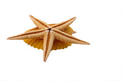A estrela do mar com shell no fundo branco Fotografia de Stock Royalty Free