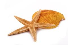 A estrela do mar com shell no fundo branco Foto de Stock