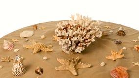 Estrela do mar, coral e shell na areia contra, branco, rotação vídeos de arquivo