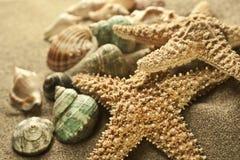Estrela do mar da areia Foto de Stock