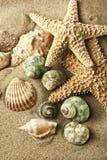 Estrela do mar da areia Imagens de Stock Royalty Free