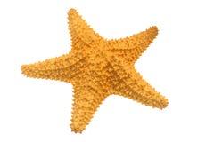 Estrela do mar das caraíbas Imagens de Stock Royalty Free