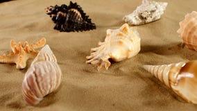 Estrela do mar diferente bonita do shellsand do mar sobre vídeos de arquivo