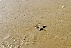 Estrela do mar do mar foto de stock royalty free