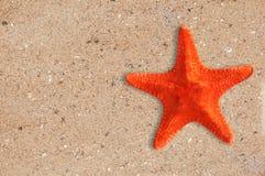 Estrela do mar do Res no fundo amarelo da areia imagem de stock royalty free