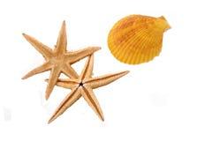 Estrela do mar dois com o shell no fundo branco Fotos de Stock