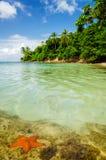 Estrela do mar e água clara Fotografia de Stock