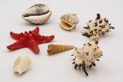 Estrela do mar e conchas do mar na tabela branca imagem de stock