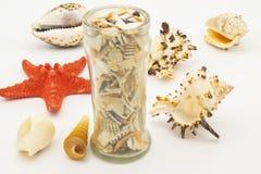 Estrela do mar e conchas do mar na tabela branca imagens de stock royalty free