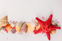 Estrela do mar e escudos Fotografia de Stock