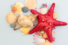 Estrela do mar e escudos Fotos de Stock