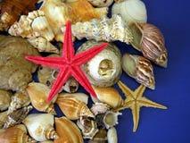 Estrela do mar e escudos imagens de stock royalty free