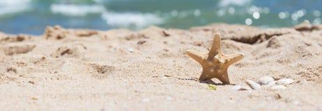 Estrela do mar e escudos na areia no litoral Imagens de Stock