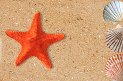 Estrela do mar e shell do Res na areia amarela fotografia de stock royalty free