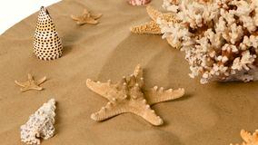 Estrela do mar e shell na areia, branco, rotação video estoque