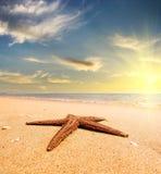 Estrela do mar em uma costa de mar no por do sol Escada do vintage conceito do curso Imagem de Stock