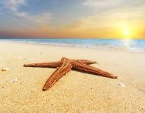 Estrela do mar em uma costa de mar no por do sol Escada do vintage conceito do curso Fotos de Stock Royalty Free