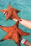Estrela do mar em uma mão Imagens de Stock