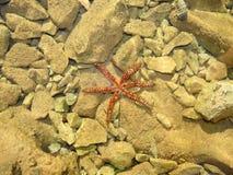 Estrela do mar em uma parte inferior arenosa Imagem de Stock